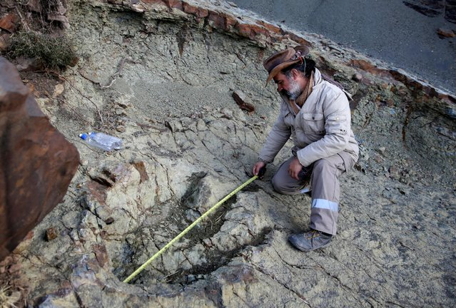 Paleontologist Sebastian Apesteguia measures the footprint made by a meat-eating predator some 80 million years ago and one of the largest of its kind ever found, at the Maragua Syncline, Bolivia, July 21, 2016. The print, which measures 1.2 meters (1.3 yards) across, probably belonged to the abelisaurus, a biped dinosaur that once roamed South America, said Argentine paleontologist Sebastian Apesteguia, who is studying the find. (Photo by David Mercado/Reuters)