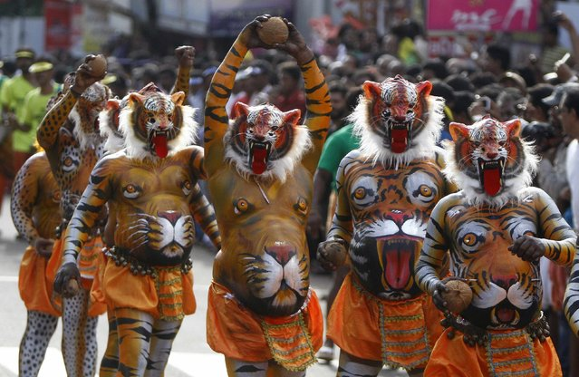 Performers painted to look like tigers dance during festivities marking the end of the annual harvest festival of Onam in Trichur city in the southern Indian state of Kerala September 10, 2014. The ten-day long festival is celebrated annually in India's southern coastal state of Kerala to symbolise the return of King Mahabali to meet his subjects. (Photo by Reuters/Babu)
