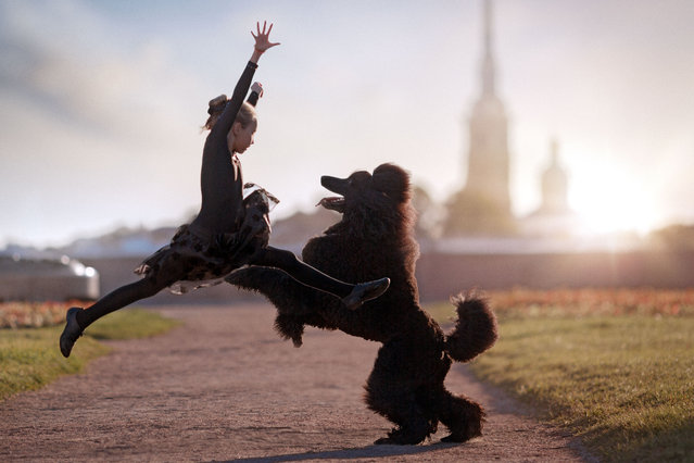 Nine-year-old Maria Palkina dancing with her black poodle. (Photo by Andrey Seliverstov/Caters News Agency)