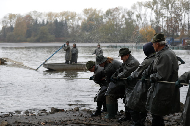 Fishermen pull on a net during a traditional fish haul of the Horusicky pond near the town of Veseli nad Luznici, Czech Republic, Tuesday, October 24, 2017. (Photo by Petr David Josek/AP Photo)