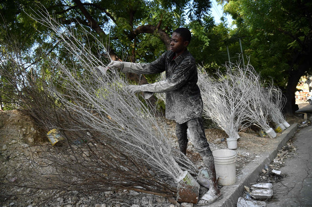 Patrice, 15, paints tree branches with white paint, to sell as Christmas decorations, in Port- au- Prince, Haiti on November 2017. (Photo by Hector Retamal/AFP Photo)