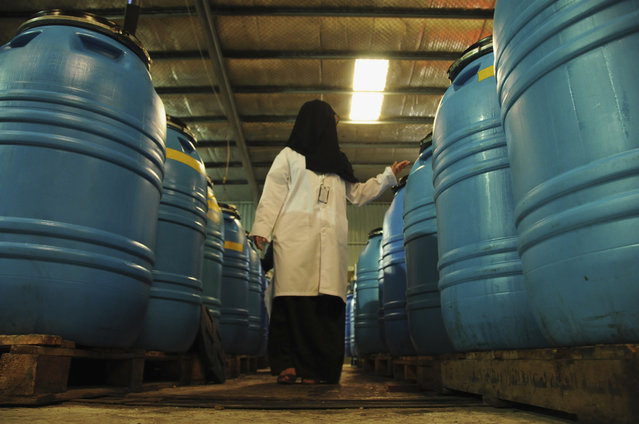 A veil-clad female worker walks in a factory for pickling olives, dates, jam productions and olive oil in the Saudi city of Tabuk August 22, 2013. (Photo by Mohamed Al Hwaity/Reuters)