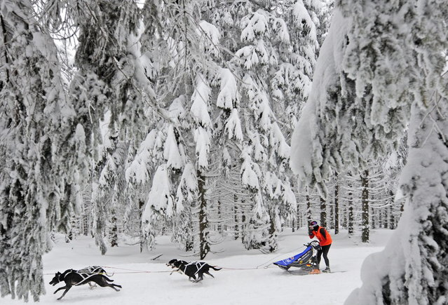 Musher Heidi Hiermeier of Germany competes with her sled dogs at the 23rd International Sled Dog Race in Oberhof, central Germany, Sunday, February 24, 2013.  (Photo by Jens Meyer/AP Photo)