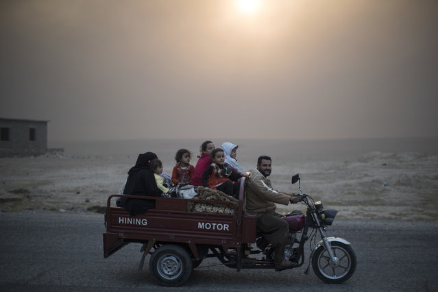 A displaced Iraqi family rides back to their home at the outskirts of Qayara, south of Mosul, Iraq, Thursday, November 3, 2016. (Photo by Felipe Dana/AP Photo)