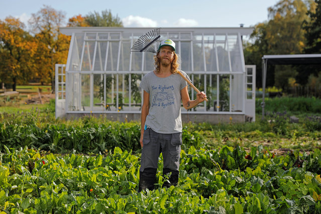 Pelle Mattsson, intern gardener at Rosendals Garden, poses for a portrait in front of a greenhouse in Stockholm, Sweden, September 27, 2016. (Photo by Maxim Shemetov/Reuters)