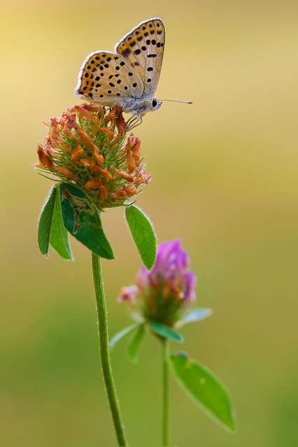 Butterfly. (Photo by Boris Godfroid)