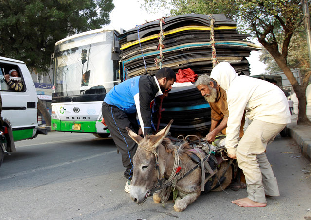 Passers-by help lift a donkey pulling an overloaded cart who layed down to rest at a traffic light in Lahore, Pakistan November 25, 2016. (Photo by Caren Firouz/Reuters)