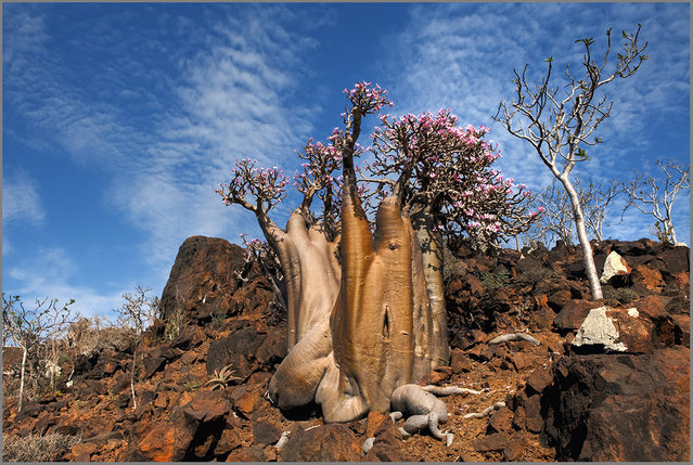 The Wonder Land of Socotra, Yemen