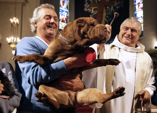 Gil Florini (R), priest of Saint-Pierre-d'Arene's church, blesses a dog on October 6, 2013 during a mass for animals in the southeastern French city of Nice. (Photo by Valery Hache/AFP Photo)