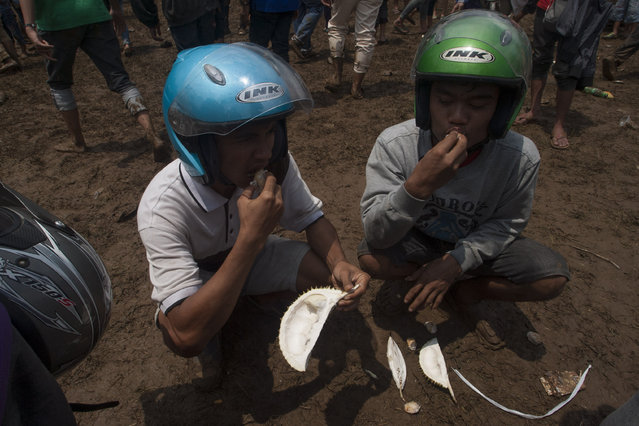 Men eat durians during festival durian at northern slopes of Mount Arjuna in East Java. (Photo by Sigit Pamungkas/JG Photo)