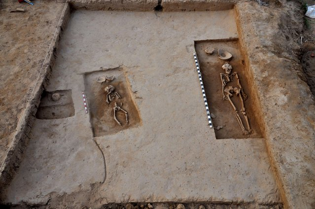 Two of four human skeletons dating back to the 5,000-year-old Harappan era which have been recovered are pictured at a burial mound at Rakhigarhi village in Hisar on March 11, 2015  Four complete human skeletons – two men, one woman and a child – thought to date back some 5,000 years have been discovered in an ancient village in northern India, archaeologists said on April 15, 2015. (Photo by Manoj Dhaka/AFP Photo)