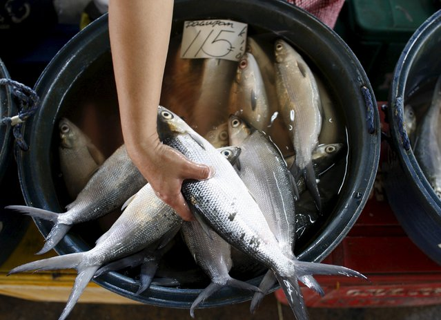 A vendor sorts her fish for sale at a fish market located in Paranaque City, metro Manila in this September 9, 2008 file photo. (Photo by Darren Whiteside/Reuters)