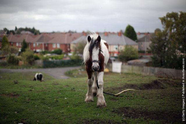 A pet horse