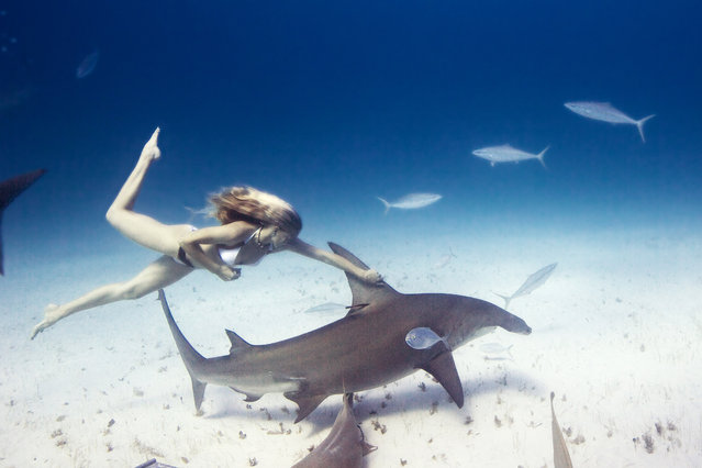 This is a photo shoot like youve never seen before  a model in glamorous dresses surrounded by sharks. However, model and shark diver Liz Parkinson decided to take the plunge and get up close and personal with some of the most revered creatures of the deep. Here: Liz swimming with Hammerheads in the Bahamas, Bimini. (Photo by Jeremy Farris/Caters News)
