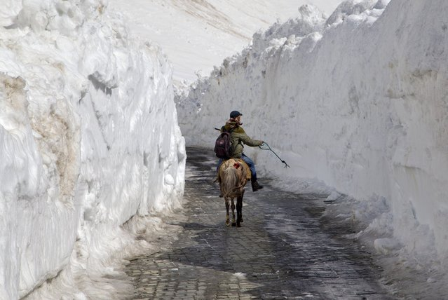 A Kashmiri man on a horse rides past walls of snow on the Zojila Pass, about 110 kilometers (68 miles) north of Srinagar, Indian controlled Kashmir, Saturday, April 30, 2016. The Srinagar-Leh national highway connecting Ladakh to the Kashmir Valley was re-opened to traffic Saturday after remaining closed for nearly six months. The highway passes through the high altitude Zojila Pass of the Himalayan range. (Photo by Dar Yasin/AP Photo)