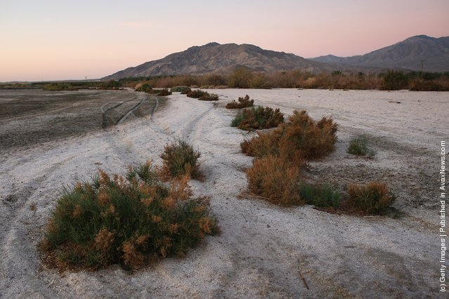 Salt-resistant plants grow in sand made up of small fish bones on the shore of the Salton Sea before sunrise in an area where a controversial development would create a new town for nearly 40,000 people on the northwest shore of the biggest lake in California, the Salton Sea