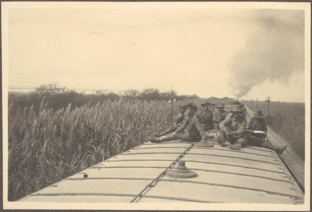 Tall bullrushes (surrounding train as seen) from top of train carriages, (where some soldiers of the 8th Light Horse Regiment travelled during the journey from Suez to Cairo, April 4, 1915)