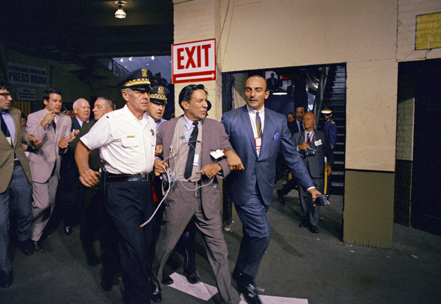 Mike Wallace, CBS-TV newsman, is hustled off the Democratic National Convention floor in the aftermath of a row between delegates and security officers during nominating session August 28, 1968 in Chicago. He was taken up a ramp to a second floor room. (Photo by AP Photo)