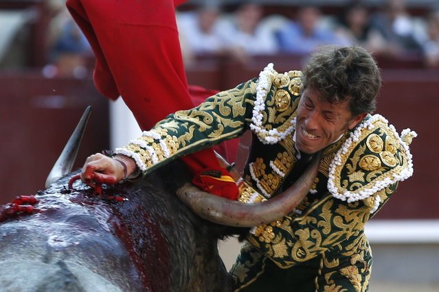 Spanish bullfighter Manuel Escribano in action with his second bull during a bullfight held on the occasion of San Isidro Fair at the Las Ventas bullring, in Madrid, Spain, 04 June 2015. (Photo by Javier Lizon/EPA)