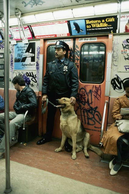 A New Transit Authority police officer and his german shepherd partner ride the subway in New York, USA, 1990s. (Photo by Tom Nebbia/CORBIS/Corbis via Getty Images)