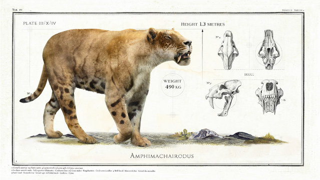 The Amphimachairodus, an early member of the cat family, was 1.3m in length and weighed an estimated 490kg. (Photo by Sky TV/The Guardian)