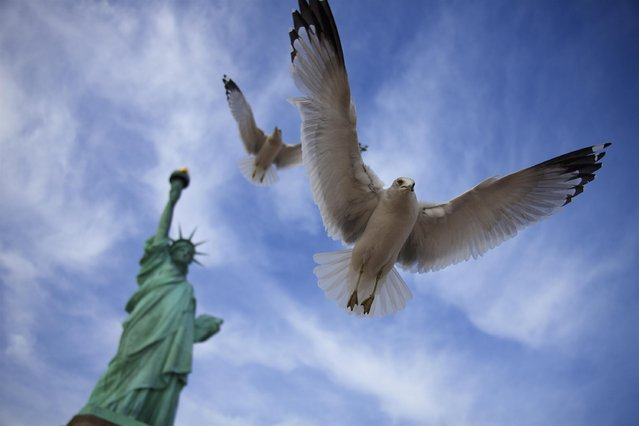 """Flight to liberty"". Seagulls flying around the Statue of Liberty, New York city. (Photo and caption by  Dafna Ben Nun/National Geographic Traveler Photo Contest)"