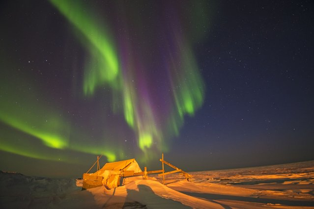 Northern lights (Aurora borealis) glow brightly over an Inupiaq fish camp along the arctic coast in North Slope, Alaska. (Photo by Steven Kazlowski/Barcroft Media)