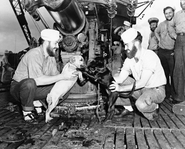 Bearded seamen, kneeling beneath the deck gun of a U.S. submarine back in port after raids on Japanese shipping which netted two war ships and two merchant vessels, introduce Dinkie Di Digger, right, mascot of the sub, to Flange Face, pet of another underwater raider also in port for reconditioning on February 10, 1943. (Photo by AP Photo)