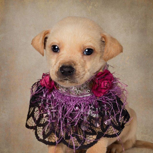 A puppy in a neck piece, taken in El Dorado, Arkansas, December 2016. (Photo by Tammy Swarek/Barcroft Images)