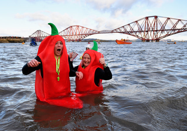 Members of the public dressed as chillies react to the cold water as they join around 1,000 New Year swimmers, many in costume, in front of the Forth Rail Bridge during the annual Loony Dook Swim in the River Forth on January 1, 2017 in South Queensferry, Scotland. (Photo by Jeff J. Mitchell/Getty Images)