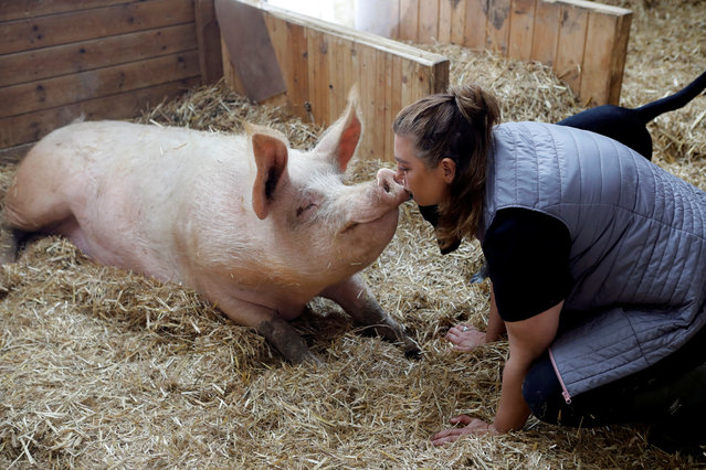 "Meital Ben Ari, a co-founder of ""Freedom Farm"" kisses Omri a pig, in his sty at the farm, which serves as a refuge for mostly disabled animals in Moshav Olesh, Israel on March 7, 2019. (Photo by Nir Elias/Reuters)"