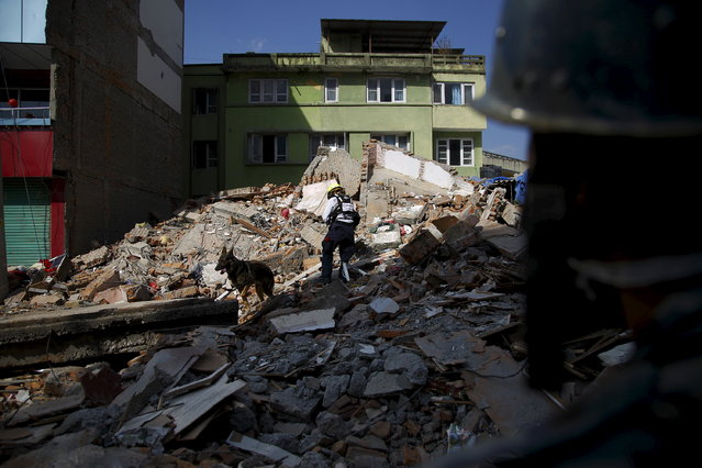 A U.S. rescue team member along with a sniffer dog searches for victims on a collapsed house after the earthquake in Kathmandu May 12, 2015. (Photo by Navesh Chitrakar/Reuters)