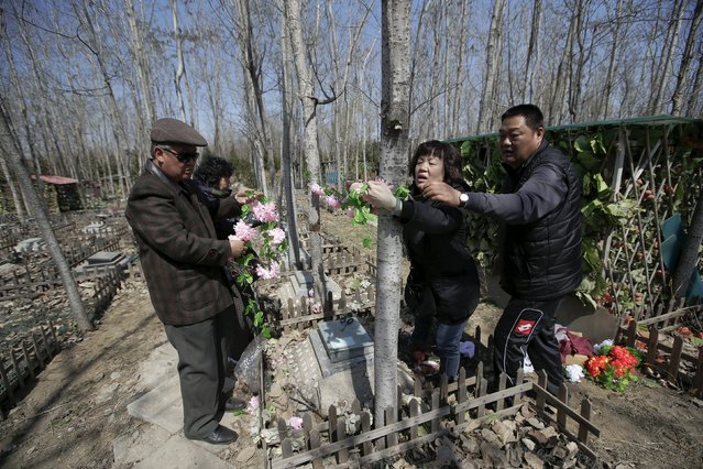 A pet owner (2nd R) and her relatives set up decoration flowers for her pet dog Li Naonao at Baifu pet cemetery ahead of the Qingming Festival, also known as Tomb Sweeping Day, on the outskirts of Beijing, China March 26, 2016. (Photo by Jason Lee/Reuters)