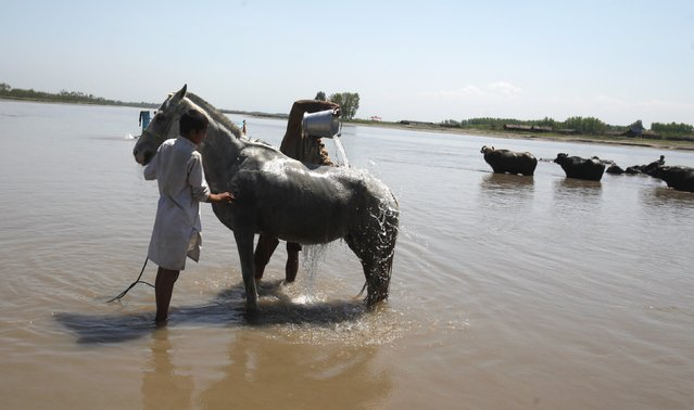 Men bathe their horse in the Sardaryab River in Charsadda near Peshawar April 8, 2015. (Photo by Fayaz Aziz/Reuters)