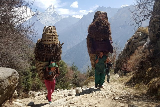 Nepalese women carry firewood in the Khumbu Valley in the Everest region of Nepal in this picture taken April 20, 2016. (Photo by Antoni Slodkowski/Reuters)
