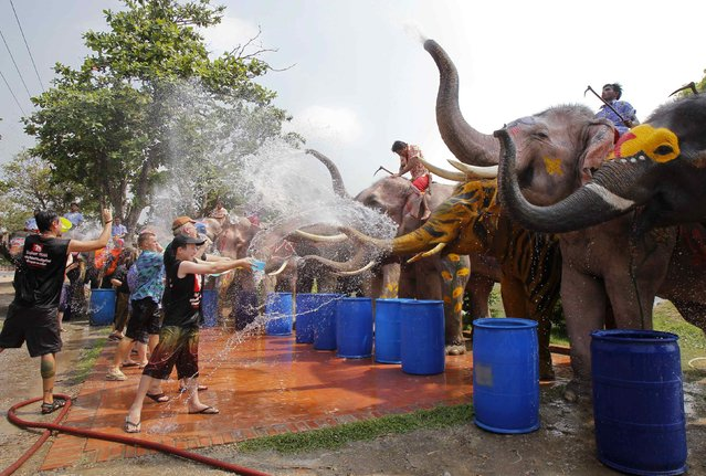 Elephants spray tourists with water in celebration of the Songkran water festival in Thailand's Ayutthaya province, about 80 km (50 miles) north of Bangkok, April 9, 2014. (Photo by Chaiwat Subprasom/Reuters)