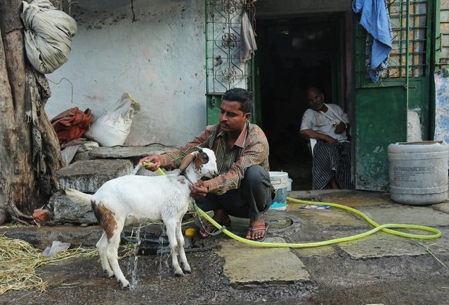 An Indian man uses a hose to bathe his goat to provide relief from the heat in Hyderabad, in the southern Indian state of Telangana, Saturday, May 23, 2015. About 230 people have died since mid-April in a heat wave sweeping Andhra Pradesh and Telangana states, officials said Saturday. Day temperatures in Telangana's Khammam district soared to more than 48 degrees Celsius (118 Fahrenheit) on Saturday. (Photo by Mahesh Kumar A./AP Photo)