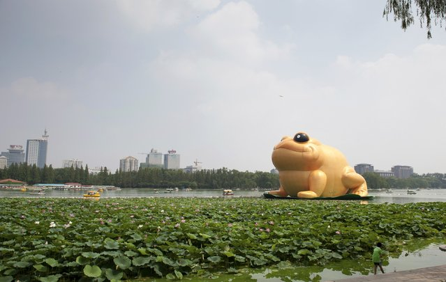 "A giant inflatable toad is seen floating on a lake at the Yuyuantan Park in Beijing, July 19, 2014. The ""golden toad"", which represents wealth and good fortune in traditional Chinese culture, is 22 metres (72.2 feet) tall and was displayed in the park from Saturday, local media reported. (Photo by Reuters/Stringer)"