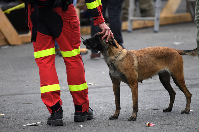 Spanish rescue team members with their dogs are seen at the at Colonia Roma in Mexico City on September 23, 2017, four days after the powerful quake that hit central Mexico. A strong 6.1 magnitude quake shook Mexico on Saturday, causing panic in traumatized Mexico City, where rescuers trying to free people trapped from this week's earlier earthquake had to suspend work. (Photo by Pedro Pardo/AFP Photo)