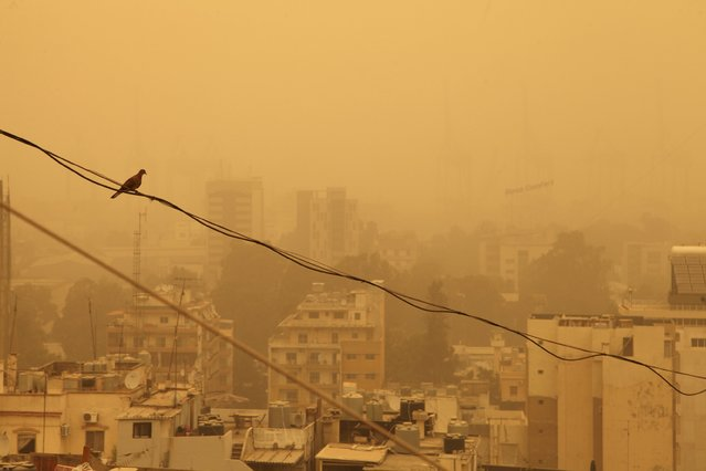 A pigeon sits on a wire during a sandstorm in Beirut, Lebanon September 8, 2015. (Photo by Alia Haju/Reuters)