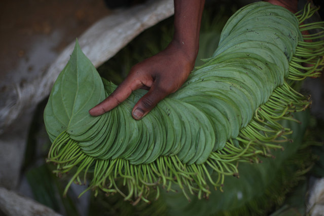 "Faruk, 17, a Rohingya refugee trader holds betel leaves which are on sale at a stall in Palong Khali refugee camp near Cox's Bazar, Bangladesh, November 3, 2017. He left his village in Myanmar when the military opened fire towards the Rohingya. ""I buy this betel leaf from Palong Khali market, in one bundle there are 160 pieces, I buy it for 80 taka and I sell it for 100 taka. Bangladeshi's and I sell for the same rate in the camp. Outside in the local market it is 80 taka per bundle. My problem is that I don't have money so I can't buy anything to eat, I can't buy fish to eat"", he said. (Photo by Hannah McKay/Reuters)"