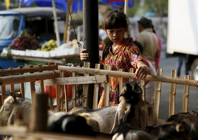 A girl looks at goats inside a pen at a makeshift livestock market ahead of the Eid al-Adha festival in Jakarta September 23, 2015. (Photo by Darren Whiteside/Reuters)
