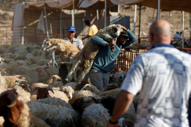 Vendors carry sheep after selling them to a customer at a livestock market, ahead of the Eid al-Adha festival, in Amman, Jordan September 11, 2016. (Photo by Muhammad Hamed/Reuters)