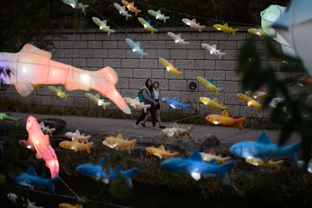 Illuminated lanterns in the shape of fish are displayed above the Cheonggyechun stream in central Seoul during the 6th annual lantern festival on November 6, 2014. The festival, which runs for 17 days, aims to promote cultural and historical awareness through four themed sections. (Photo by Ed Jones/AFP Photo)