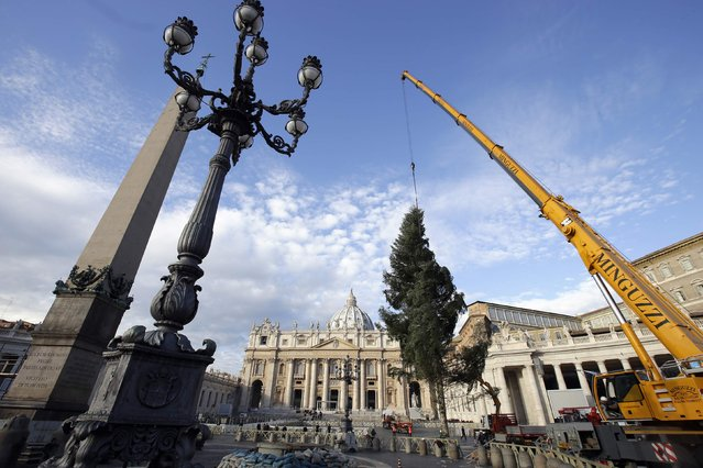 Workers erect a Christmas tree in St. Peter's Square at the Vatican December 4, 2014. The 70-year-old Christmas tree was donated by the southern Italian region of Calabria. (Photo by Max Rossi/Reuters)