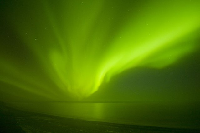 Northern lights (Aurora borealis) glow brightly and snake over the 1002 coastal area of the Arctic National Wildlife Refuge in North Slope, Alaska. (Photo by Steven Kazlowski/Barcroft Media)