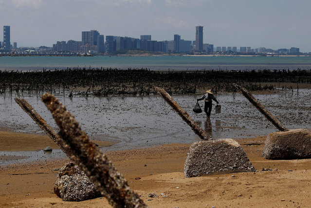 An oyster farmer walks in front of China's Xiamen, ahead of the 60th anniversary of Second Taiwan Straits Crisis against China, on Lieyu Island, Kinmen County, Taiwan August 20, 2018. (Photo by Tyrone Siu/Reuters)