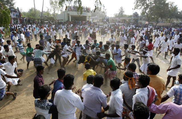People try to hold on to a bull during Jallikattu, an annual bull fighting ritual on the outskirts of Madurai, Tamil Nadu state, India, Saturday, January16, 2016. India's Supreme Court had on Tuesday banned this year's bull fighting ritual at the harvest festival Pongal in southern India following angry protests from activists who say the sport amounts to animal torture. Supporters say Jallikattu is more than 2,000 years old and is a deep-rooted part of Tamil Nadu's celebration of the harvest festival. (Photo by Arun Sankar K./AP Photo)