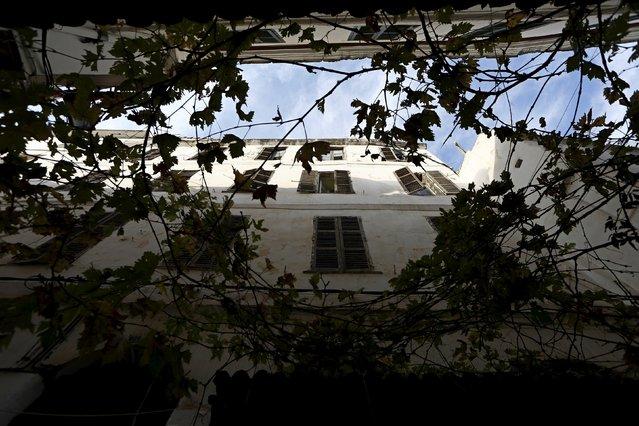 Plants grow in the old city of Algiers Al Casbah, Algeria December 13, 2015. (Photo by Zohra Bensemra/Reuters)