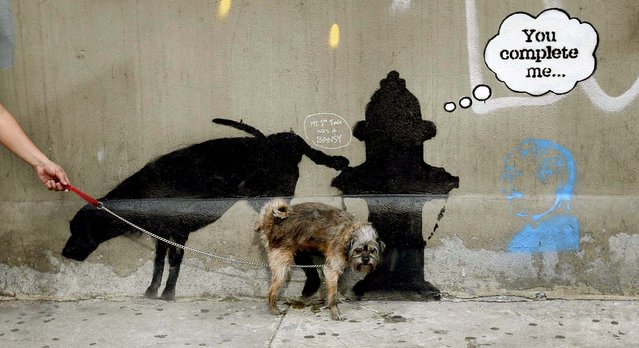 A dog urinates on the new work on West 24th street.   (Photo by Mike Segar/Reuters)